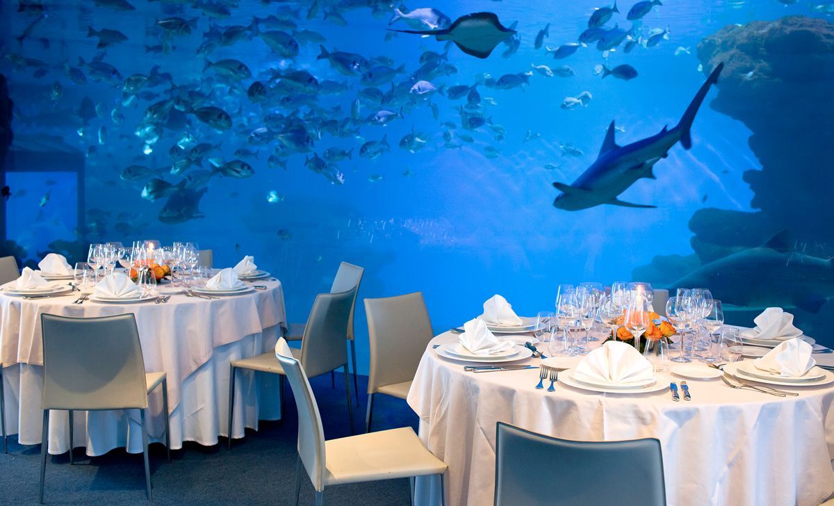 dinner with sharks