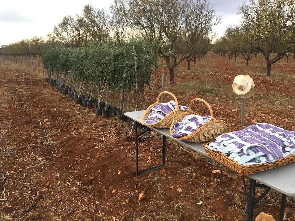 Evento sostenible en Mallorca. Planta un árbol.